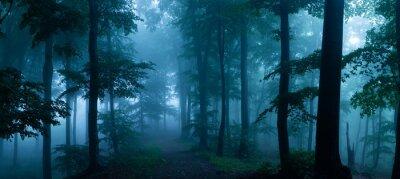 Fototapeta Zimny mgłowy ranek w horroru lesie