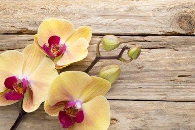 Fototapeta Yellow orchid.