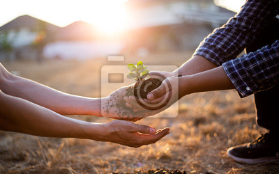 Fototapeta Young seedlings are ready to grow in fertile soil, Agriculture gave the young men trees to prepare for planting and reduce global warming, Save world save life and Plant a tree concept..