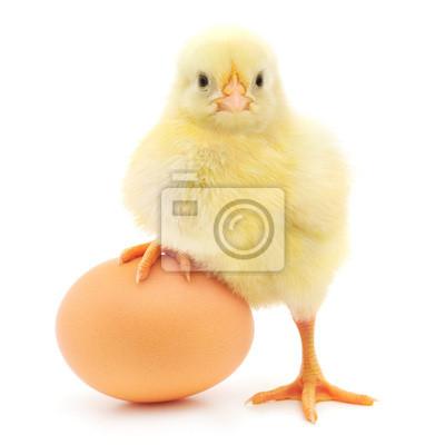 Fototapeta z kurczaka i jaj