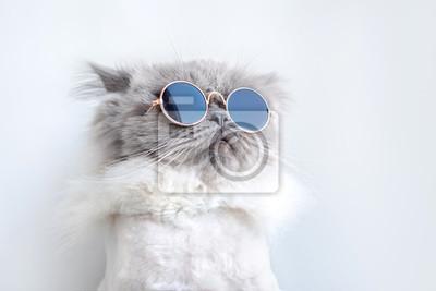 Fototapeta zabawny portret kota w okulary