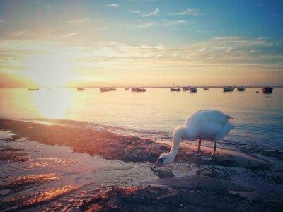 Fototapeta Zachód słońca nad Bałtykiem