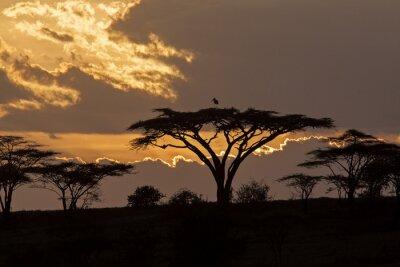 Fototapeta Zachód słońca safari