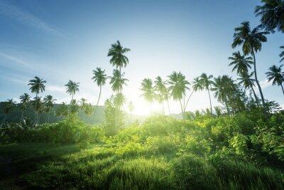 Fototapeta zachód słońca w dżungli, Seszele