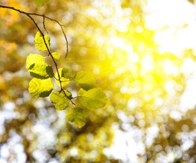 Zachód słońca w lesie jesienią
