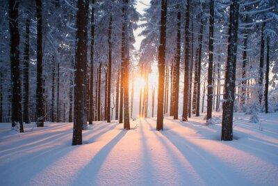 Fototapeta Zachód słońca w lesie w okresie zimowym