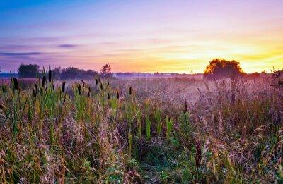 Fototapeta Zachód słońca w polu latem