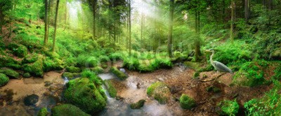 Fototapeta Zachwycająca panorama lasów z łagodnym światłem padającym przez liście, strumień ze spokojną wodą i czaplą