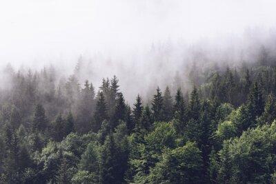 Fototapeta Zalesione zbocze górskie w nisko położonej chmurze