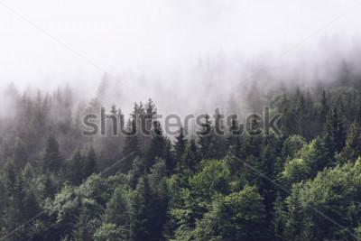 Fototapeta Zalesiony stok górski w nisko leżącej chmurze z wiecznie zielonymi iglakami owiniętymi mgłą w malowniczym krajobrazie