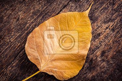 zamknąć z żółtego złota liści na pędach