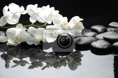 Zamknij się biała orchidea z kropli wody kamień