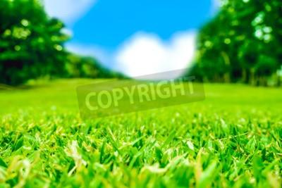 Fototapeta Zamknij się pole zielone trawa z rozmyciem parku tle