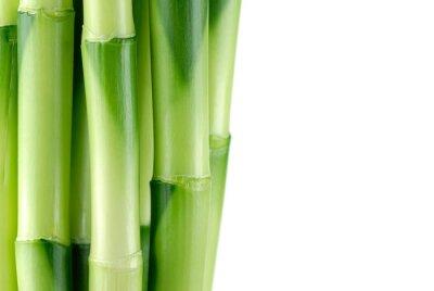 Fototapeta Zamknij się z łodygi bambusa