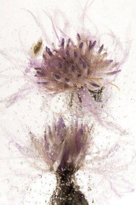 Fototapeta Zamrożone kwiaty. kwiaty w kostce lodu