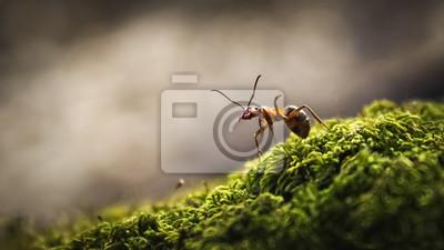Fototapeta Zbli? Enie lasu mrówek
