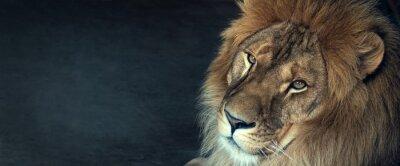 Fototapeta zbliżenie lwa afrykańskiego