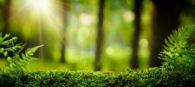 Fototapeta Zbliżenie na mech w lesie