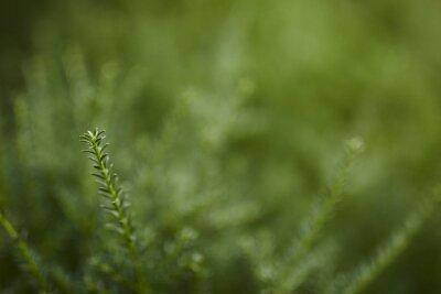 zbliżenie zielony gałąź tło
