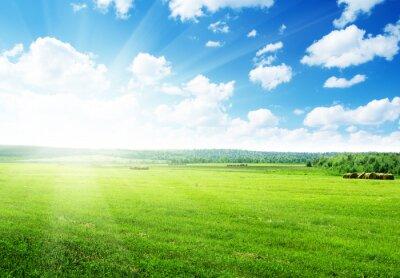 zebranych trawy w rolce i doskonały słoneczny dzień