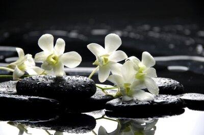 Zen kamienie i białe storczyki z refleksji