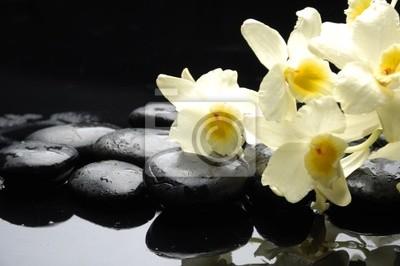 Zen kamienie i storczyki z kropli wody