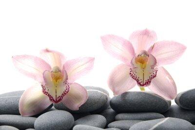 Fototapeta Zen kamienie z dwóch jasnych storczyków
