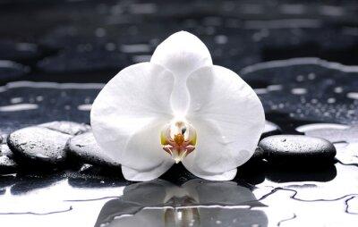 zen lub spa still life na czarnym z białym storczyków
