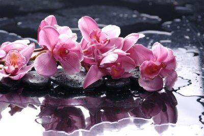 Zen stone i różowa orchidea z krople wody