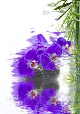 Fototapeta zen wystrój, orchidée et bambou