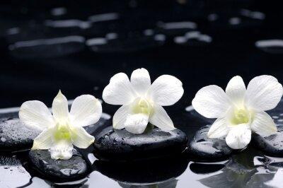 Fototapeta Zestaw białych storczyków na czarnym kamieniu z refleksji