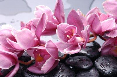 Zestaw Cattleya orchid kwiat i kamień z kropli wody