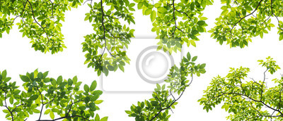 Fototapeta zestaw gałęzi z liśćmi na białym tle