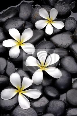 Zestaw kwiatów frangipani na kamyk