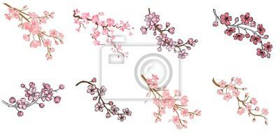 Fototapeta Zestaw oddziału sakura z kwiatów i liści na białym tle. Projekt wiosna wiśni. Ilustracji wektorowych.