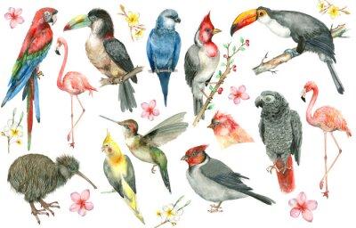 Fototapeta Zestaw tropikalny ptak