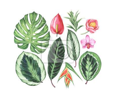 Zestaw tropikalnych kwiatów i liści. Akwarela ręcznie rysowane ilustracji.