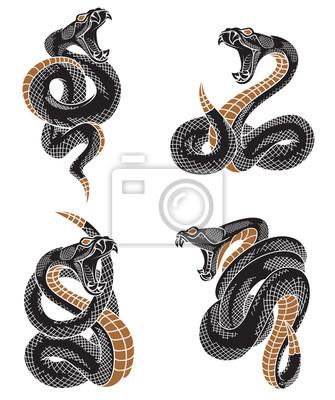 Fototapeta Zestaw węża Vipera. Ręcznie rysowane ilustracje w technice grawerowania atramentu na białym tle witka.