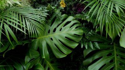 Fototapeta Zieleni tropikalni liście Monstera, palma, paproć i ornamentacyjnych rośliien tła tło ,.