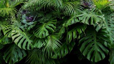 Fototapeta Zieleni tropikalni liście Monstera, paproć i palmowi fronds rainforest ulistnienia rośliny krzaka kwiecisty przygotowania na ciemnym tle, naturalny liść tekstury natury tło.