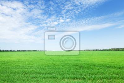 Fototapeta Zielona trawa i błękitne niebo