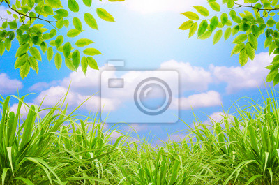 zielona trawa i błękitne niebo i zielony liść