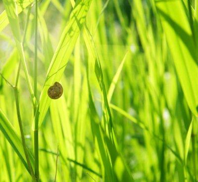 Fototapeta zielona trawa i ślimak