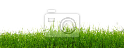 Zielona trawa na białym tle