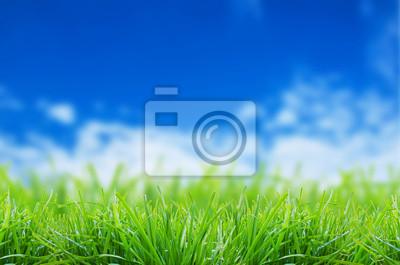 Zielona trawa na tle niebieskiego nieba