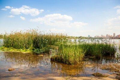 Fototapeta Zielona trawa w rzece