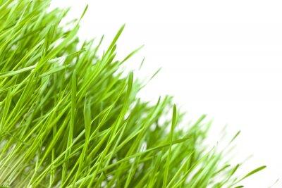 Fototapeta Zielona trawa wyizolowanych na białym tle