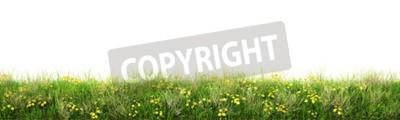 Fototapeta Zielona trawa z kwiatami. Samodzielnie na białym tle.