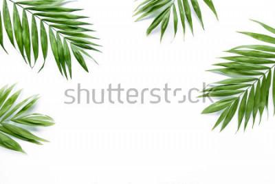 Fototapeta zielone gałązki palmowe na białym tle. płaskie lay, widok z góry