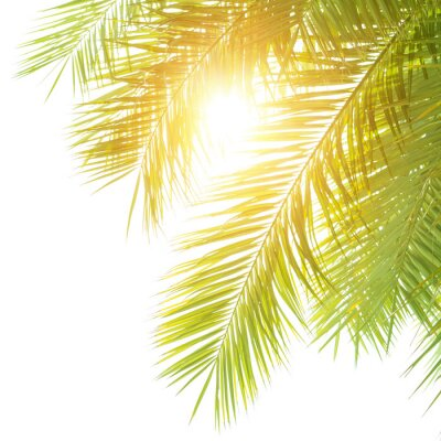 Fototapeta Zielone liście palmowe granicę